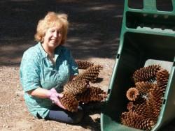 Louise-yard pine cones5